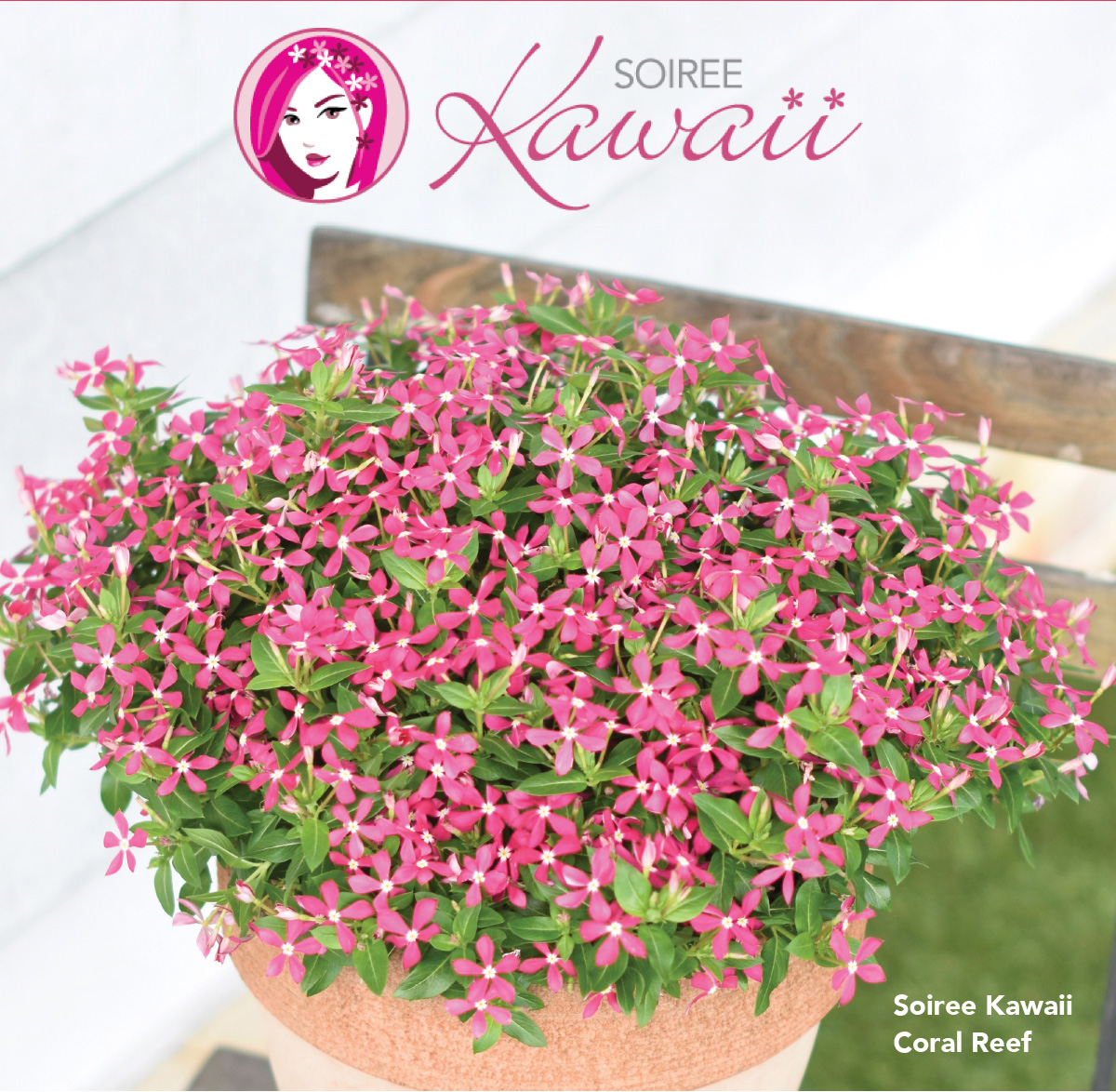 Suntory Soiree Kawaii CORAL REEF