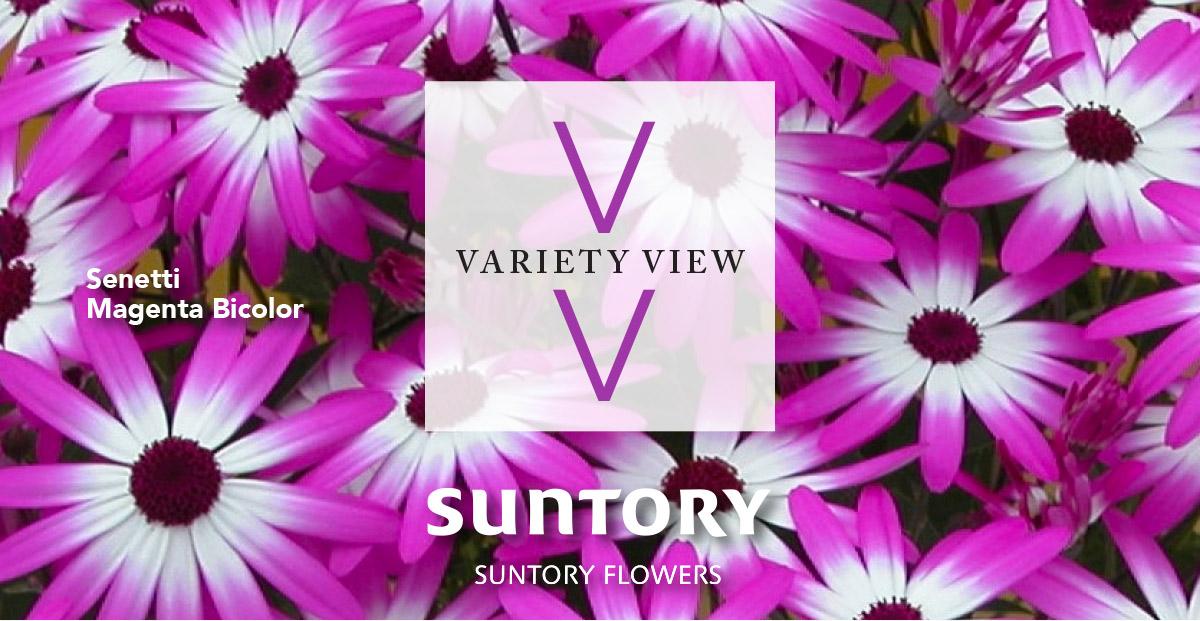 Suntory Flowers Variety View – Digital Marketing Resources