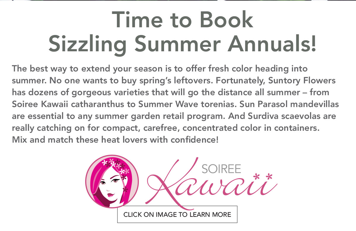 Learm More about Soiree Kawaii Catharanthus