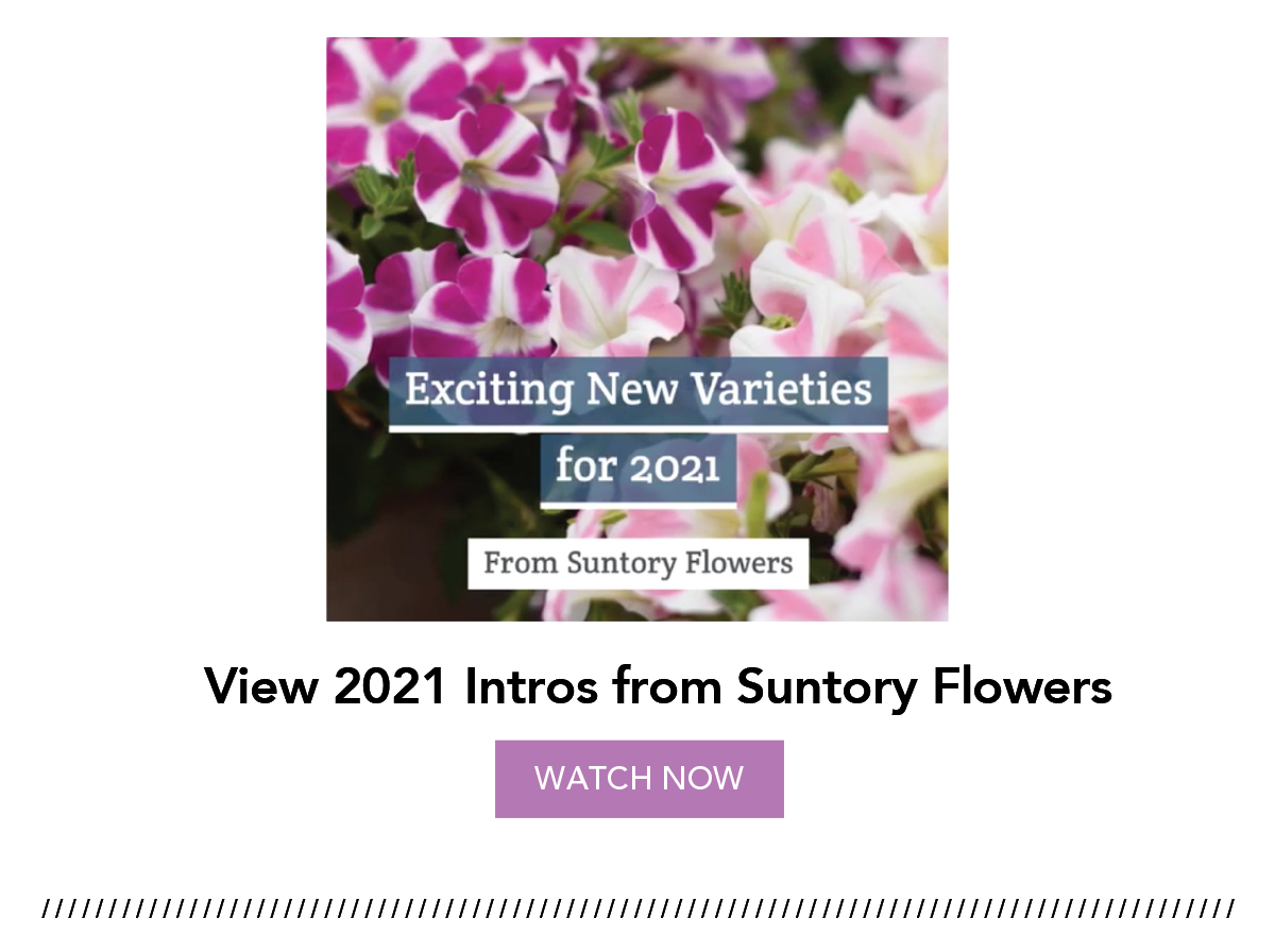 View 2021 Intros from Suntory Flowers