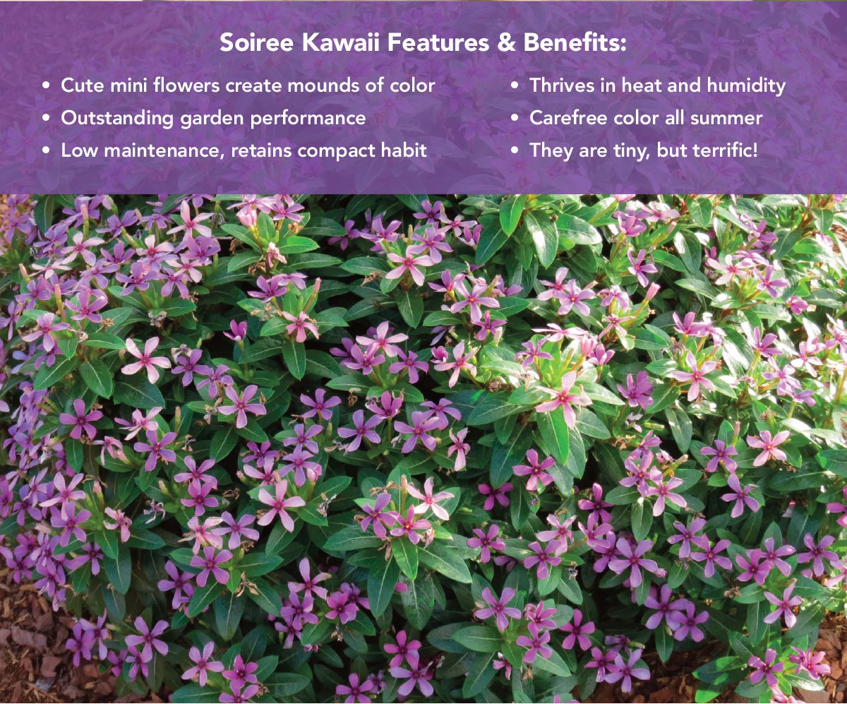 Soiree Kawaii Features and Benefits