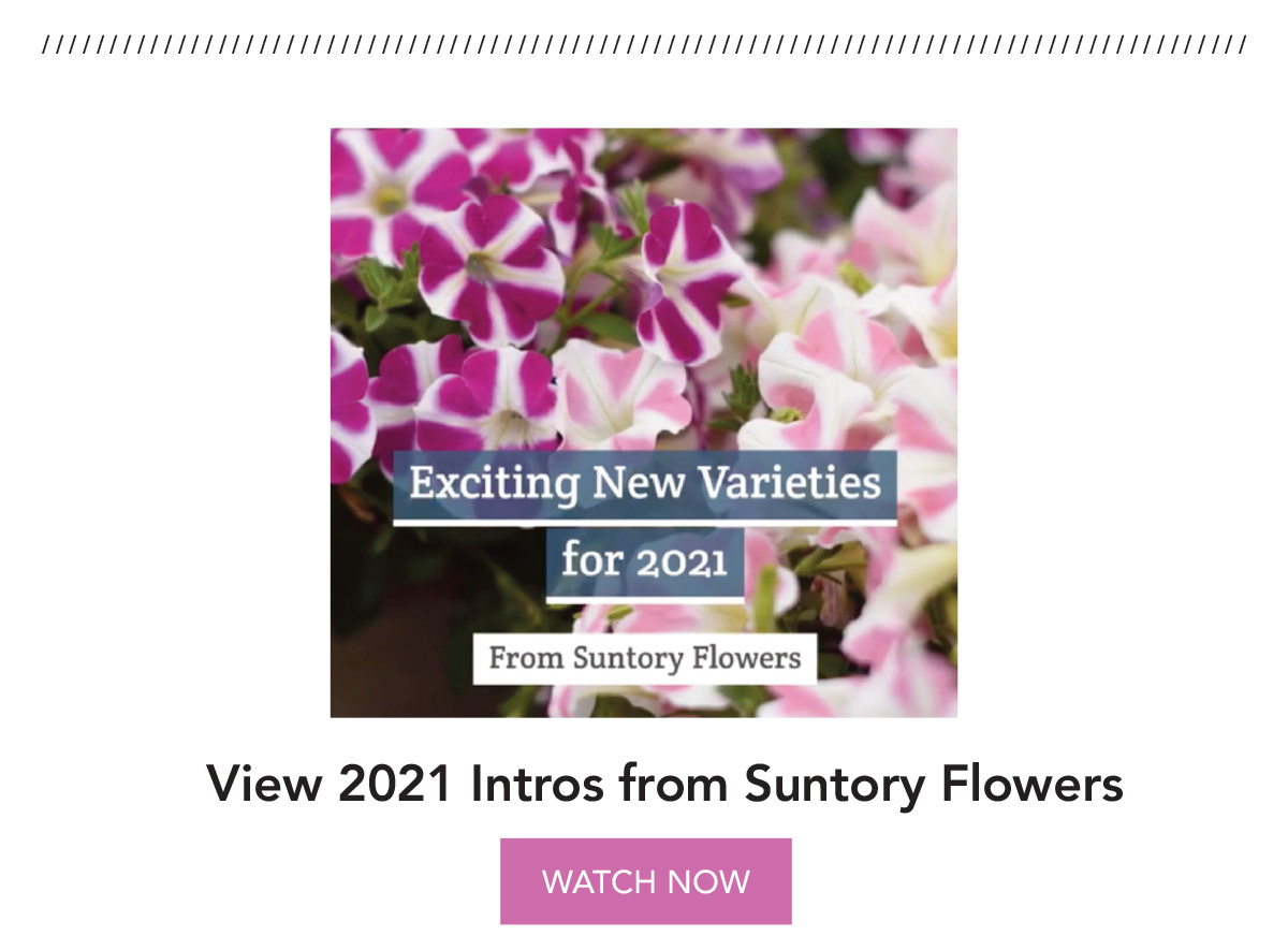 Watch the video: New Varieties for 2021