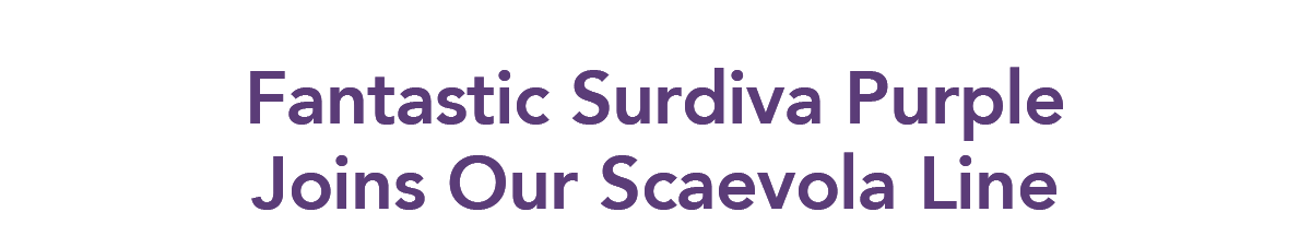 Fantastic Surdiva Purple Joins Our Scaevola Line
