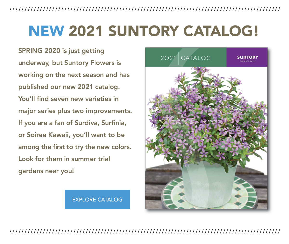 Hot off the presses! Download the 2021 catalog NOW