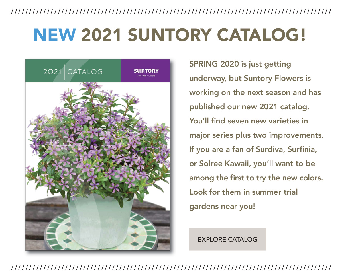 Download the 2021 Suntory Flowers catalog here