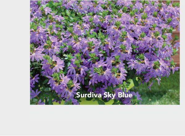 Surdiva Sky Blue