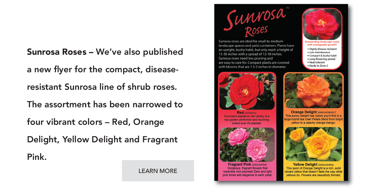 Suntory Sunrosa Roses catalog - PDF Download.