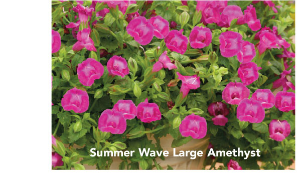Summer Wave Large Amethyst