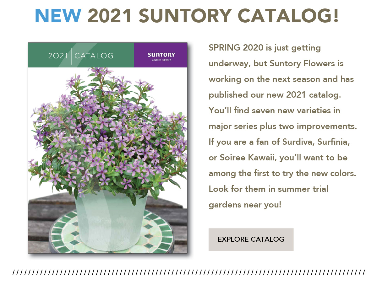Download the 2021 catalog here