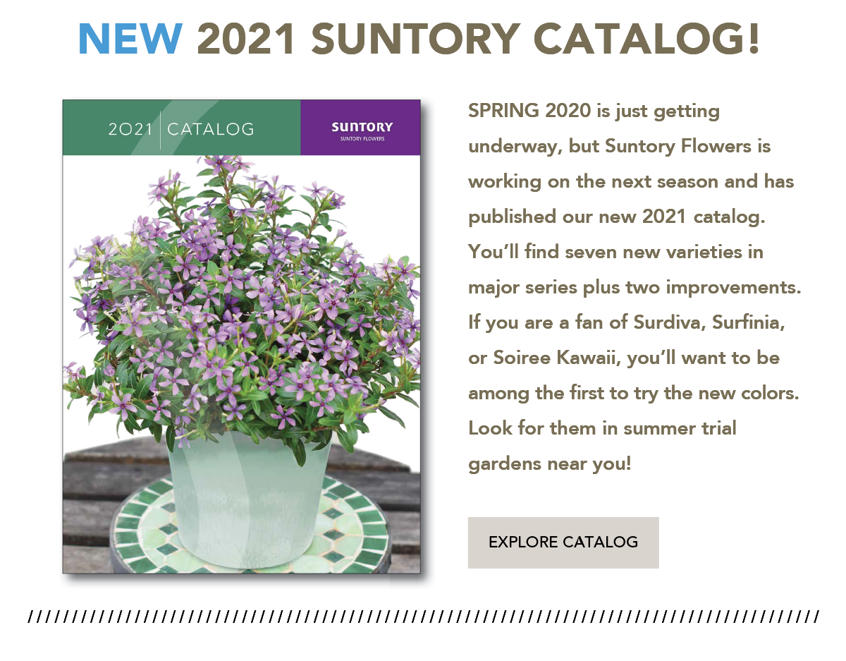 New 2021 Suntory Flowers Catalog