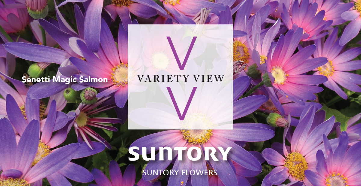 Suntory Flowers Variety View – Senetti Brings Magic to Disney