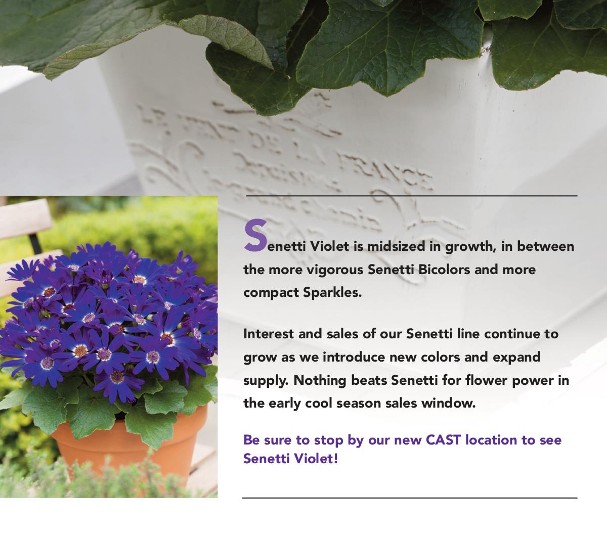 Nothing beats Senetti for flower power in the early cool season sales window.