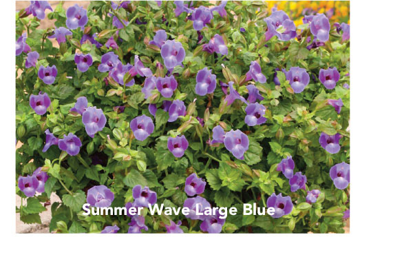 Summer Wave Large Blue