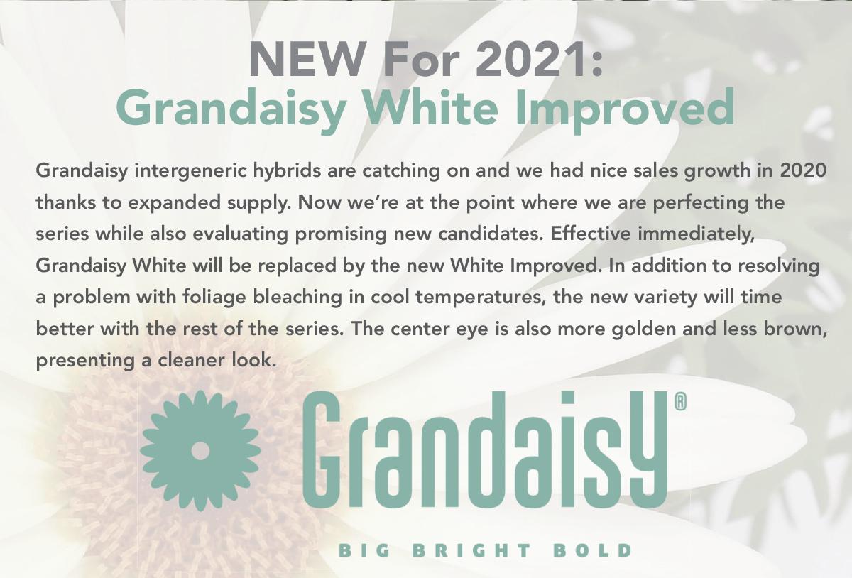 Grandaisy White Improved