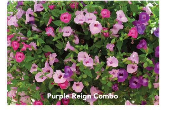 Purple Reign Combo