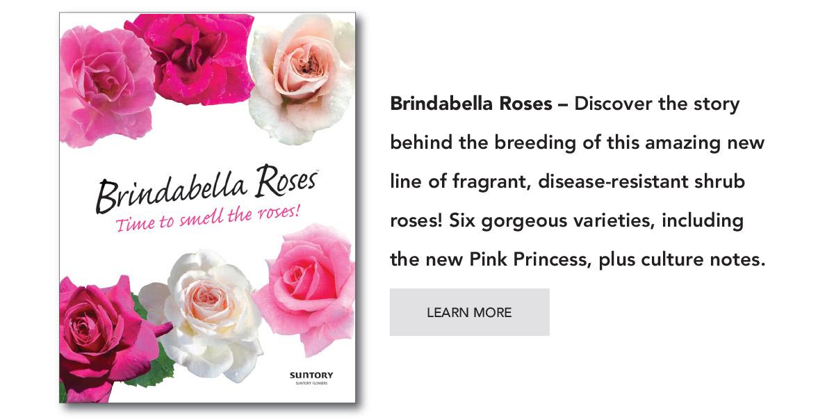 Suntory Brindabella Roses catalog - PDF Download.