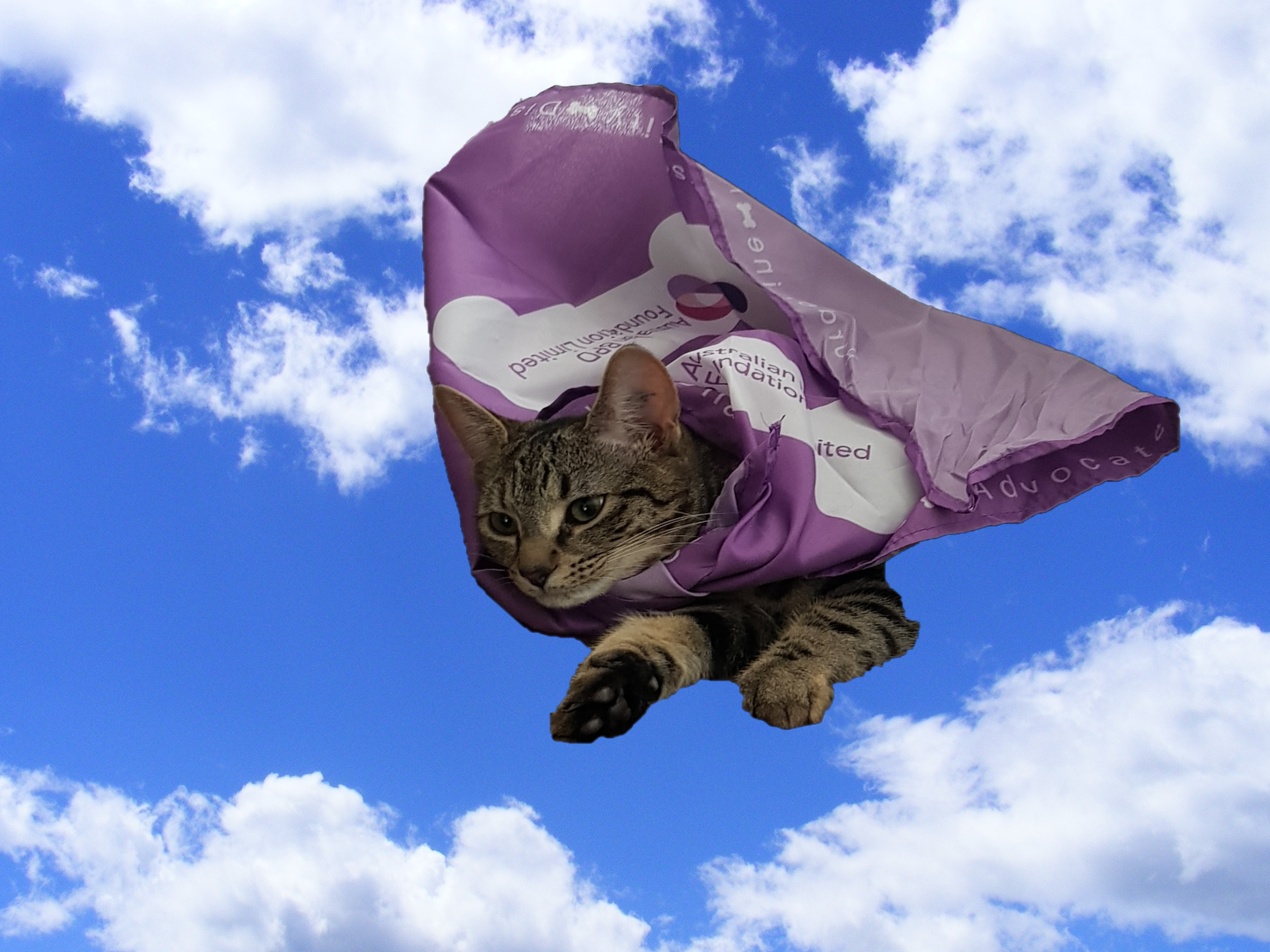 Kittens in Capes