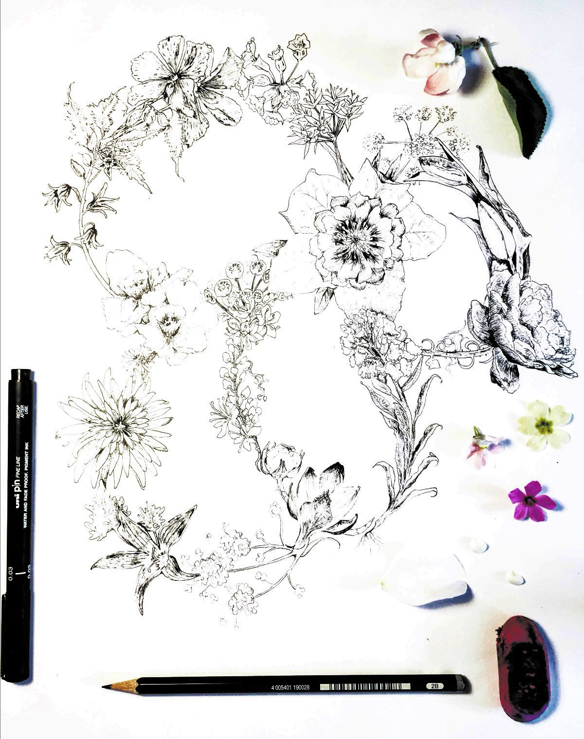Botanicals Illustration
