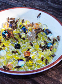 Best Water Souce for Bees