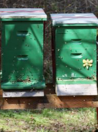 Sun and Shade for Bees