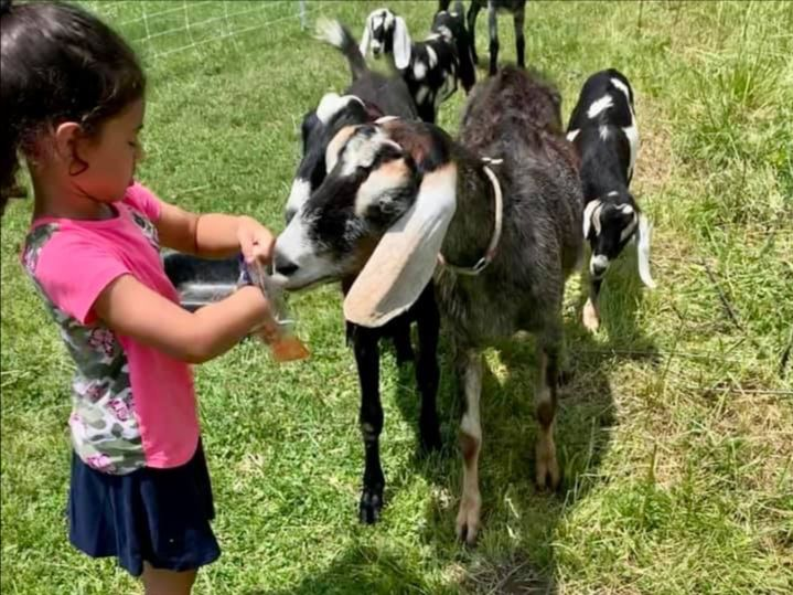 Child enjoying farm tour