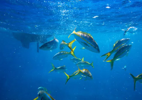 New £317,000 Project Launched on Sustainable Fisheries Management in the Virgin Islands
