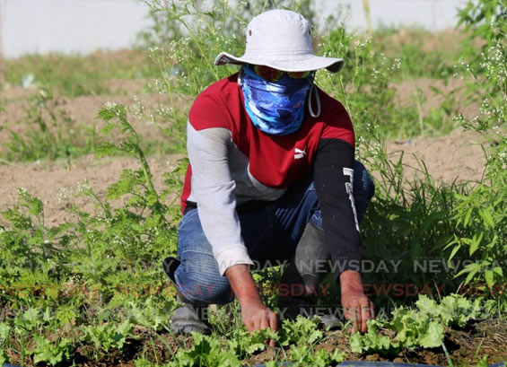 Intra-Regional Trade Key to Creating CARICOM Food Security