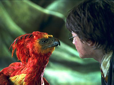 Fawkes and Harry Potter