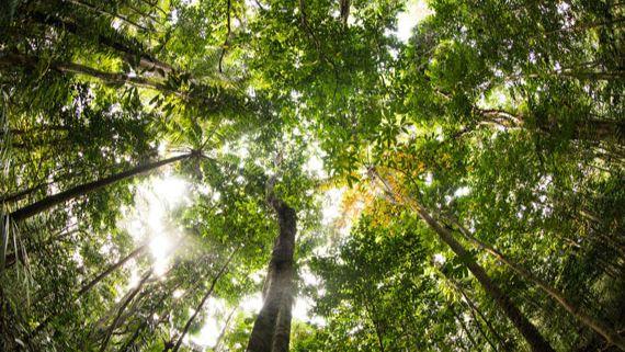 Forest on Principe island