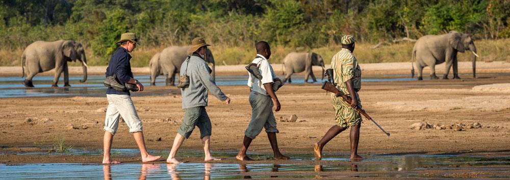 A walking safari in the South Luangwa