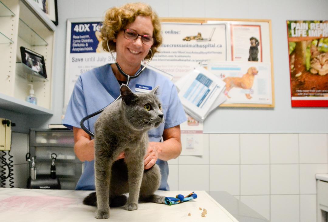 Dr. Swarney examines a cat.