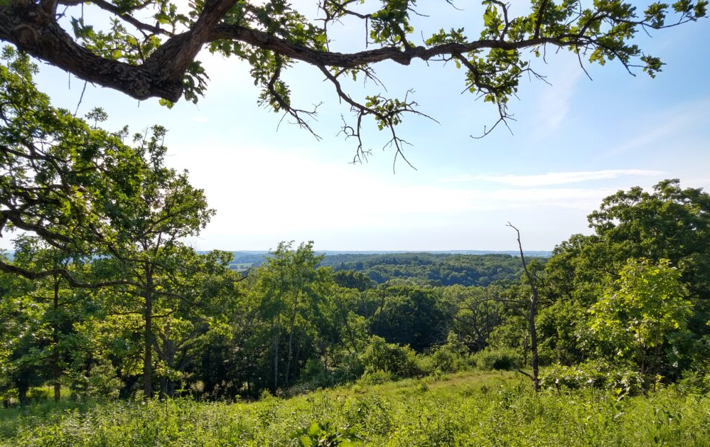 view from a hill or mountain of a green valley of grasses and trees