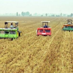 Combine harvesters in a wheat field in India's Punjab region. Just four crops – rice, wheat, maize and potatoes – provide more than 60% of the world's food (Photo: Borlaug Institute for South Asia, via Flickr, CC BY-NC-SA 2.0)