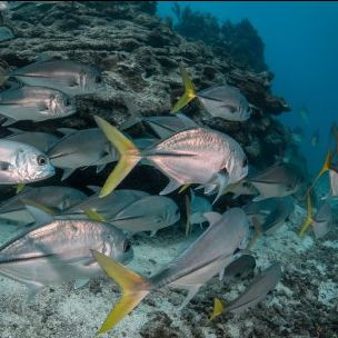 The first 'Insights' examines models for investment in marine protected areas (Photo: Philip Hamilton/Blue finance)