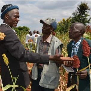 Farmers in Kenya learn about climate-resilient sorghum. Plant biodiversity will be a vital resource for climate-vulnerable farming communities (Photo: S. Kilungu/CCAFS, via Flickr, CC BY-NC-SA 2.0)