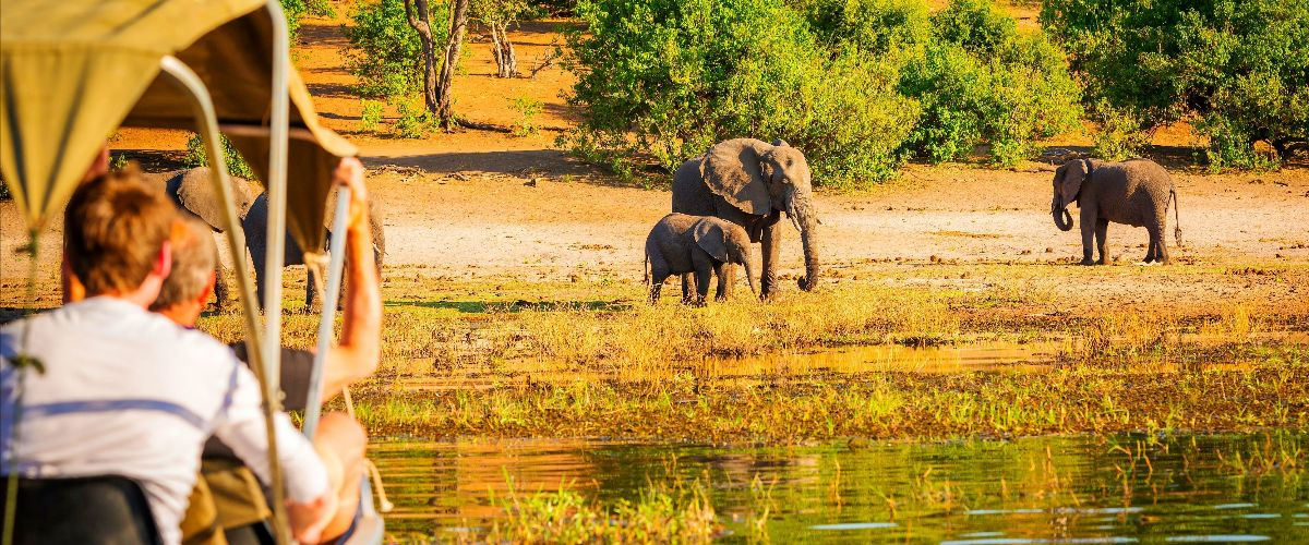 Olifanten tijdens een safari in Zuid-Afrika